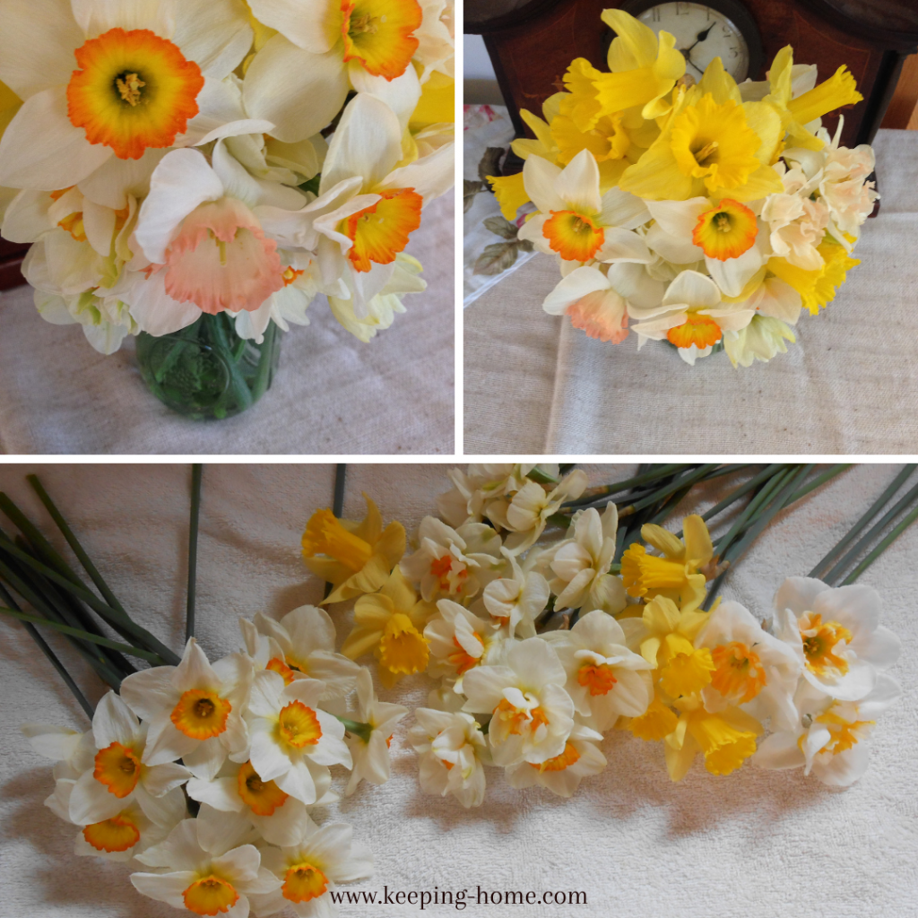 Daffodil bouquets and assortments.
