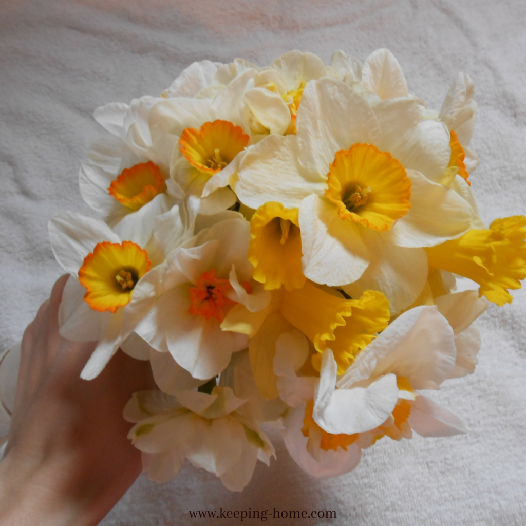 Bouquet of white daffodils with yellow and orange cups.