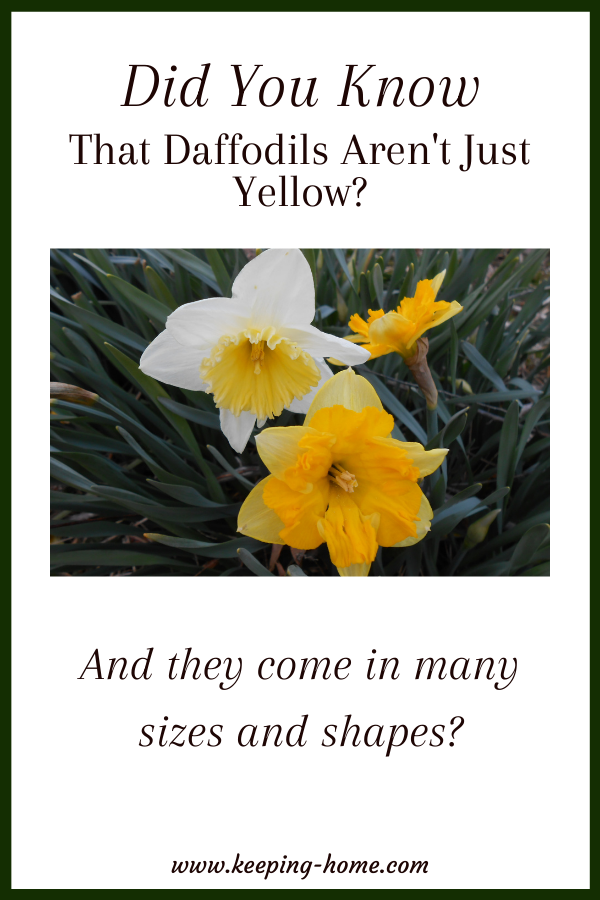 Did you know that daffodils aren't just yellow? And they come in many sizes and shapes?